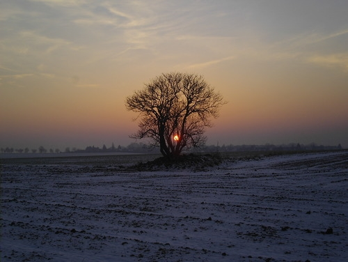 elder tree winter sun