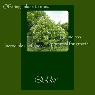 elder tree oracle card